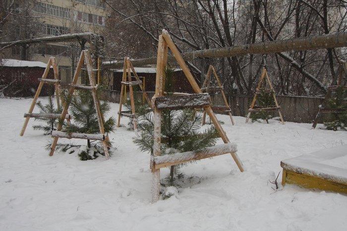 Как сделать саженцы дерева - ЛигоДизайн
