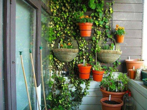 Зимний сад в домашних условиях на балконе