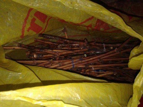 Хранение черенков в пакете