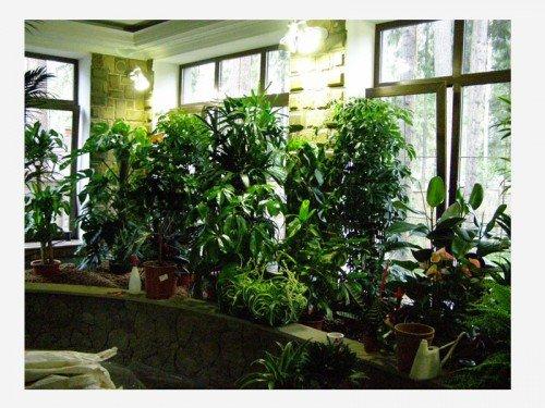 Зимний сад в домашних условиях