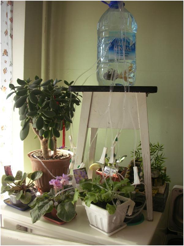 Капельницы для капельного полива: как сделать систему 93