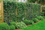 Живая изгородь шпалерного типа