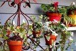 Кашпо - один из способов украсить участок с помощью цветов