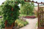 Пергола, украшенная вьющимся растением