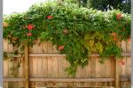 Забор украшенный вьющимся растением