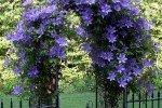 Арка, украшенная вьющимся растением