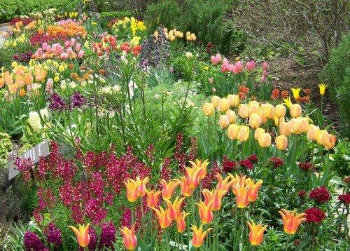 Луковичные цветы в миксбордере