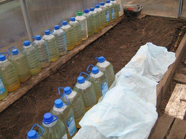 Вода для полива огурцов