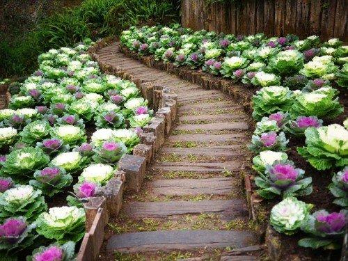 Украшение садовой дорожки декоративной капустой
