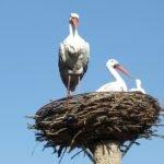 Делаем гнездо для аистов своими руками