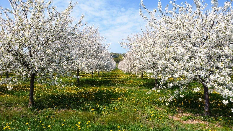 Защита сада от вредителей и болезней весной