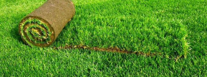 Как правильно уложить рулонный газон