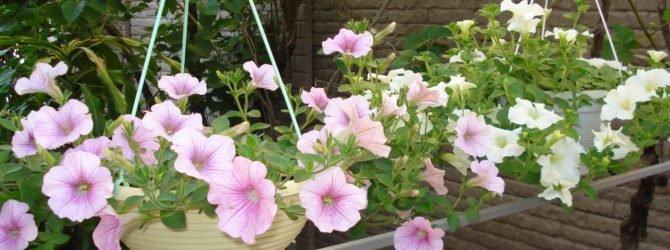 Цветочные композиции из однолетних растений