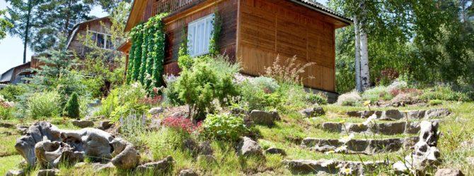 Обустраиваем дачный участок: выращивание декоративных растений