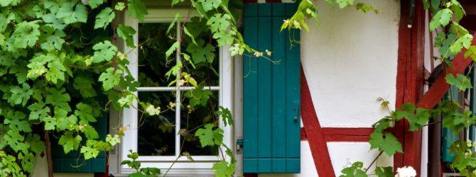 Как правильно выбрать вьющиеся растения для дачи и сада?