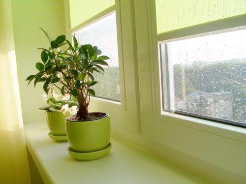 Как правильно ухаживать за комнатными растениями в осенне-зимний период