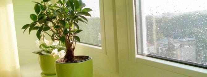 Комплексный уход за комнатными растениями в осенне-зимний период