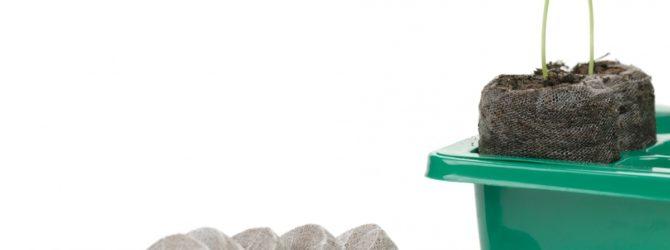 Рассада вырастет в таблетках