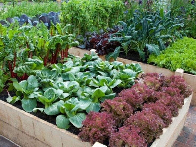Подзимние посадки овощей и зелени по промерзшим грядкам — есть нюансы