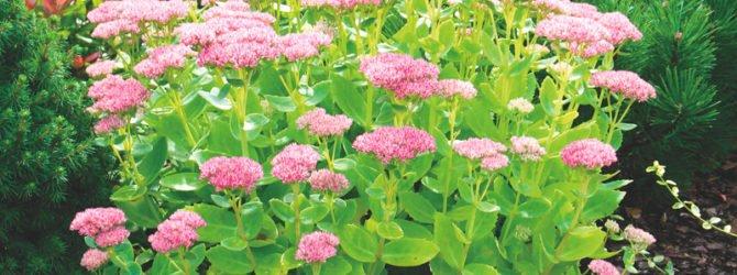 Растения, украшающие сад