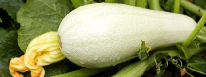 Выращиваем прекрасные кабачки