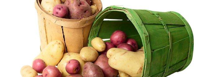 800 кг картофеля с каждой сотки? Пожалуйста!