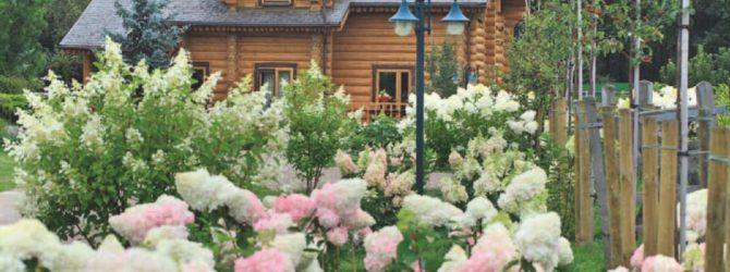 Украсьте сад цветущими кустарниками