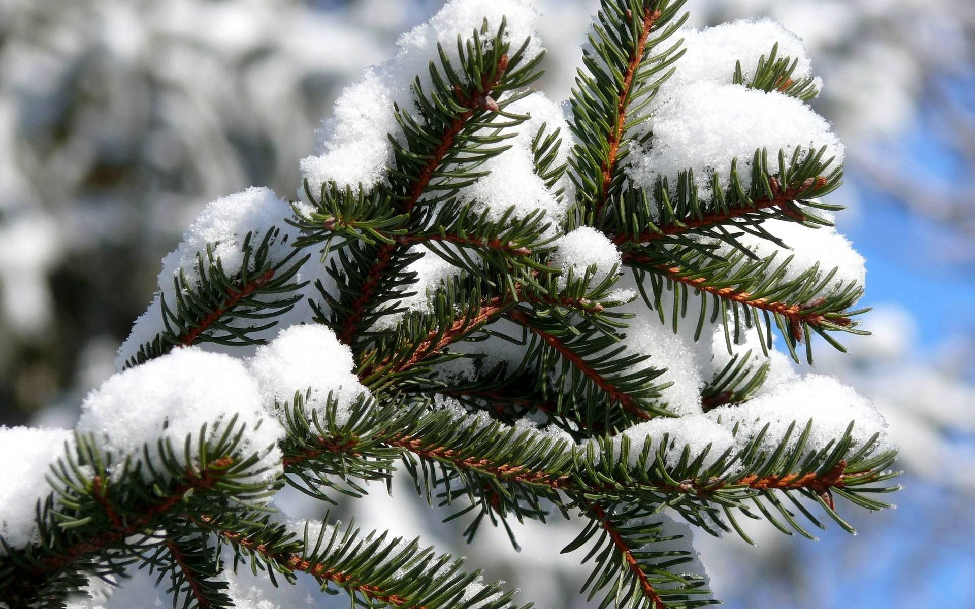 Как подготовить садовые деревья и кустарники к зиме