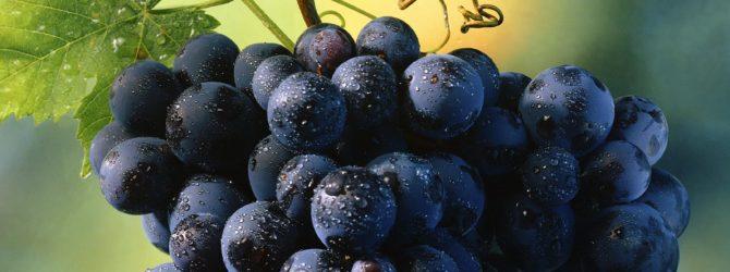 Выращивание винограда в холодном климате