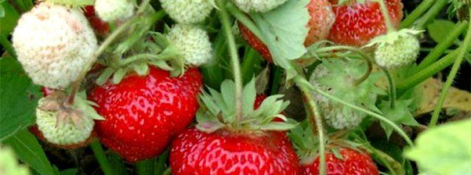 Три полезных совета садоводам