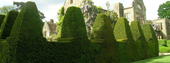 Живые изгороди вместо забора на даче