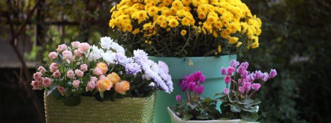 Декорируем террасу: цветы в вазонах