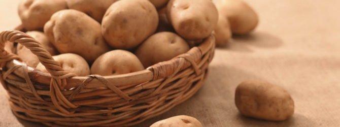 Картофель собственного сорта: экспериментируем с семенами
