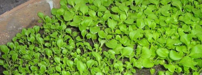 Обустраиваем теплицу для выращивания рассады