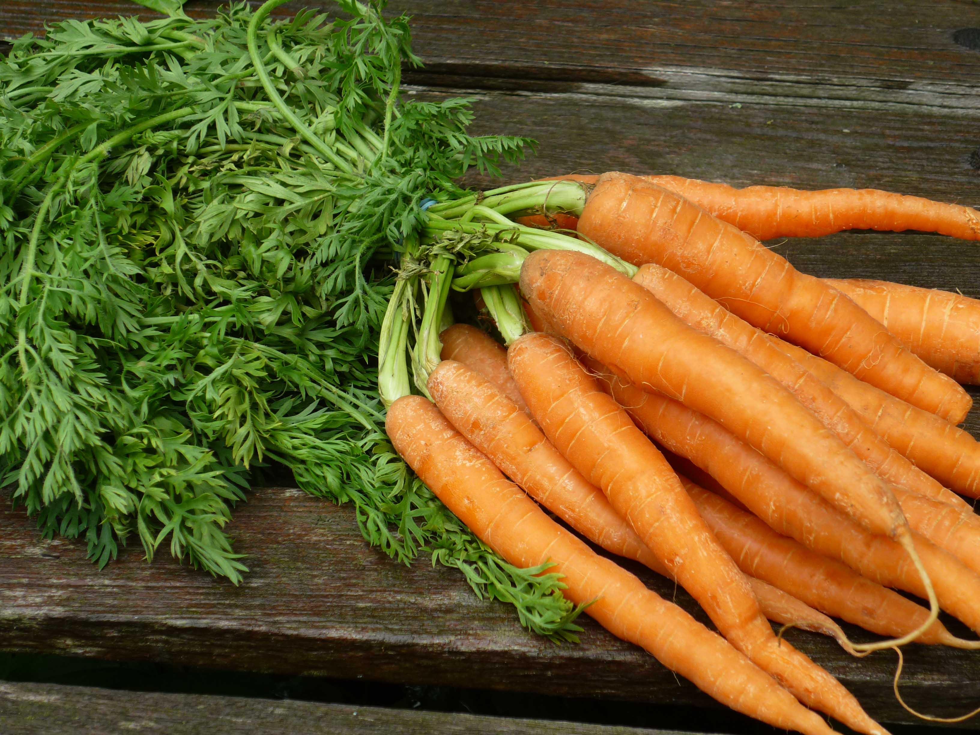 Морковь, которую не любят морковные мухи