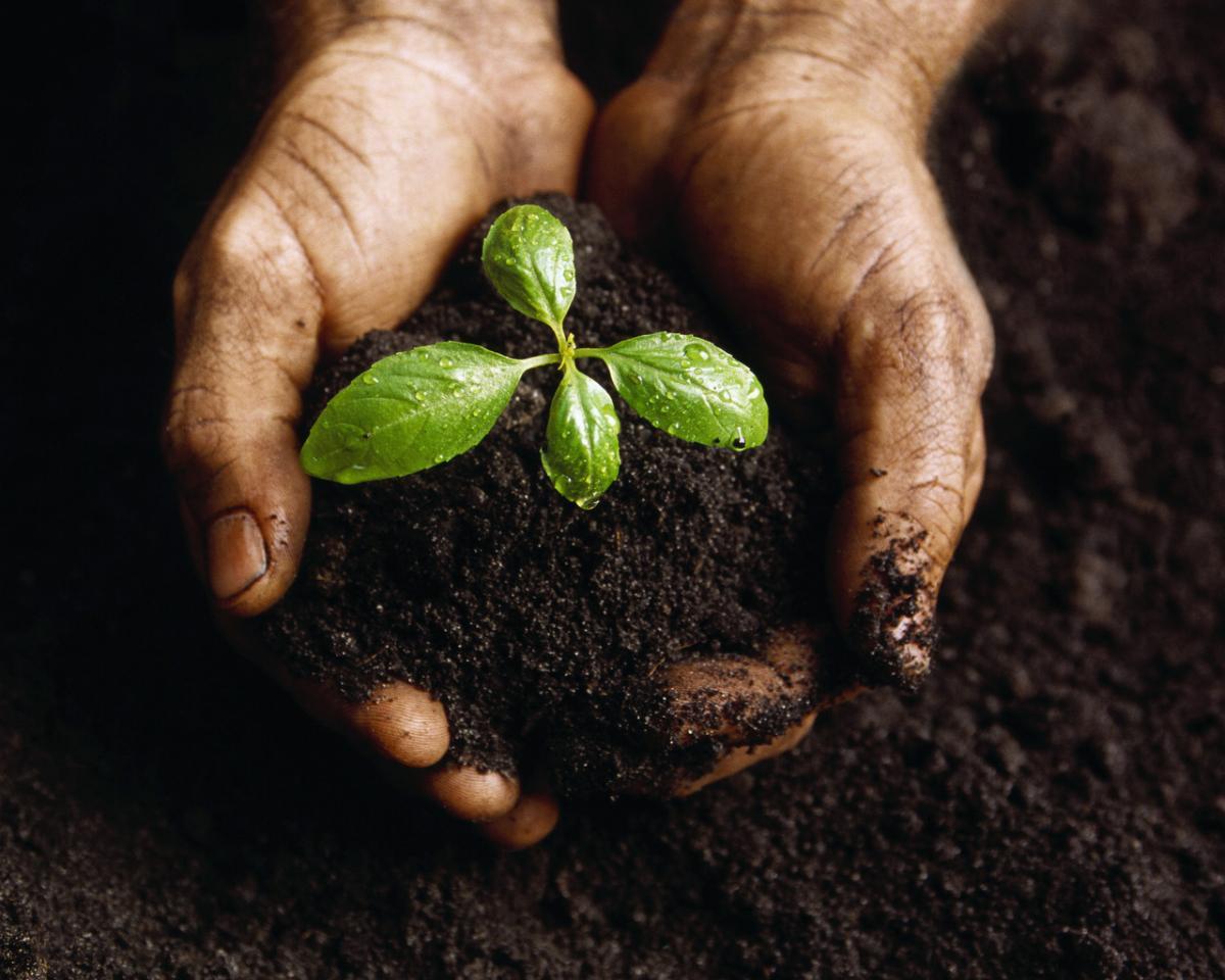 Удобрения для почвы на участке — что выбрать?