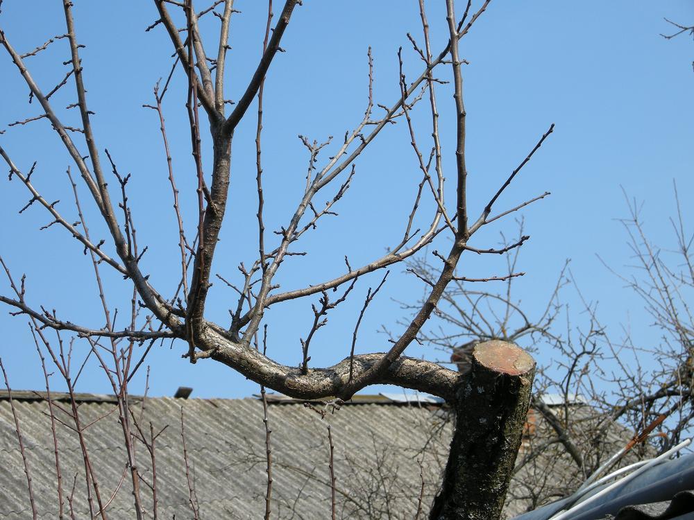 Обрезка деревьев зимой: как правильно