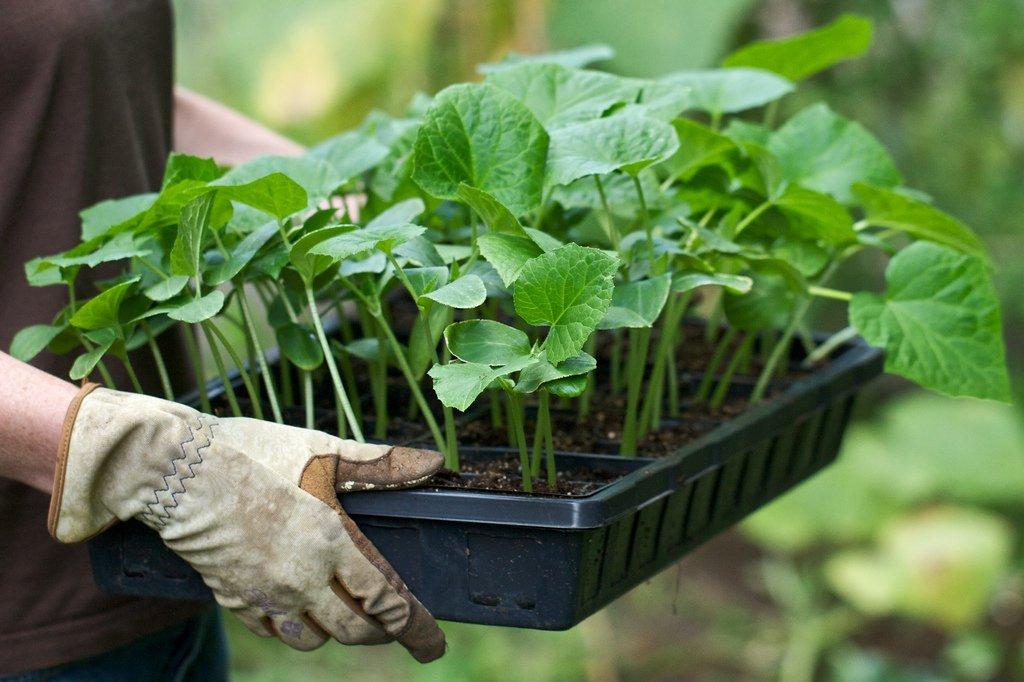 Уход за огородом: простые способы получить большой урожай