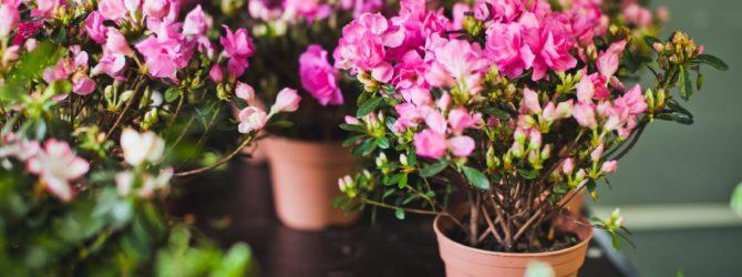Выбираем цветущие растения для дачи