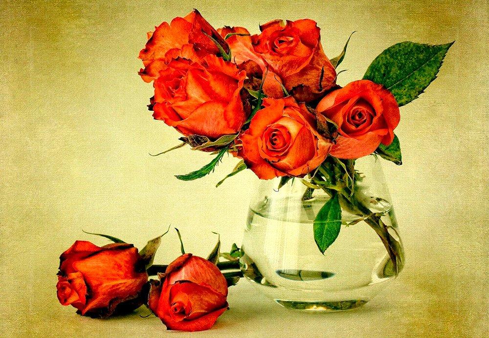 Учимся черенковать розы…