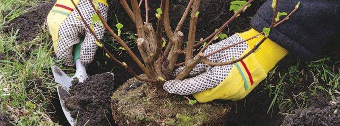 Посадка цветов, деревьев и кустарников осенью, полезные советы