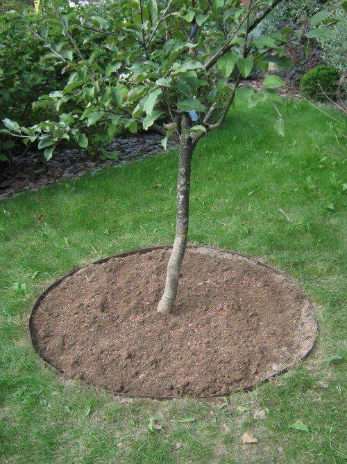 Рыхлая земля под яблоней