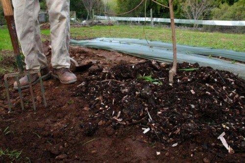 Мульчирование почвы с удобрением для яблони