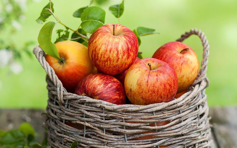 Сорт яблони Солнышко: фото, отзывы, описание, характеристики