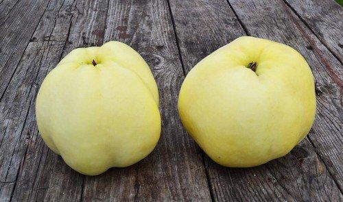 Яблоки антоновка фото