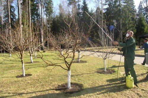 Опрыскивание молодых яблонь осенью