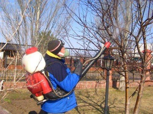 Опрыскивание яблонь осенью