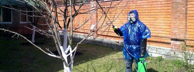 опрыскивать яблони