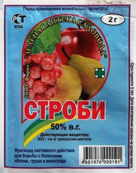 Яблоня грушовка московская описание фото отзывы