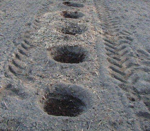 Посадочные ямы для голубики